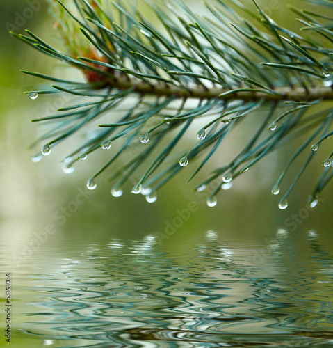Naklejka na szybę Water drops on fir tree reflected in the water