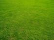 canvas print picture - grüner Rasen
