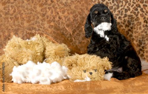 Fotografie, Obraz  naughty puppy