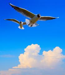 Fototapeta Zwierzęta Art flying bird in blue sky background