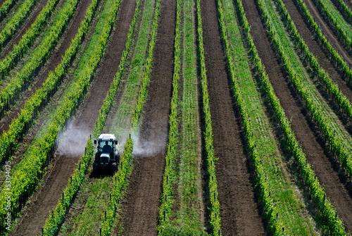 Fotomural Pestizide sprühen mit Traktor im Weingarten