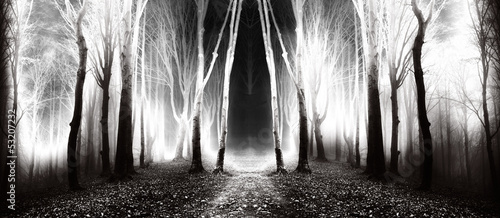 Tuinposter Zwart Dark, fairytale trails in the forest in an autumn foggy day