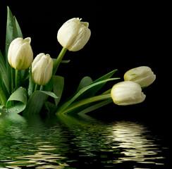 Fototapeta Woda Krople Białe tulipany
