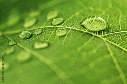 Wodna kropla na zielonym liściu