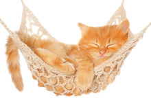 Cute Red Haired Kitten Sleepin...