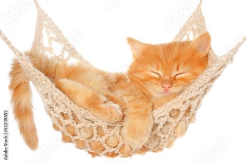 Fotografia  Cute red haired kitten sleeping in hammock