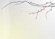 tło z gałązką kwitnącej wiśni