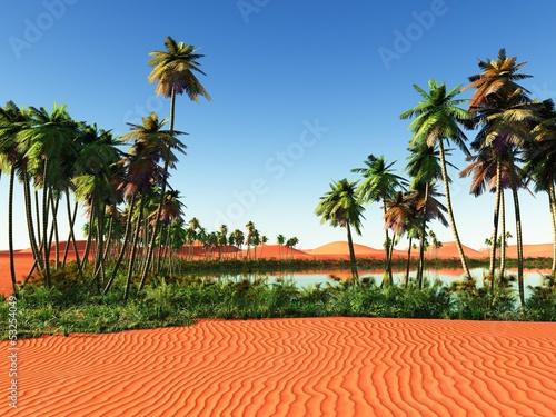 Fotografia Beautiful natural background -African oasis
