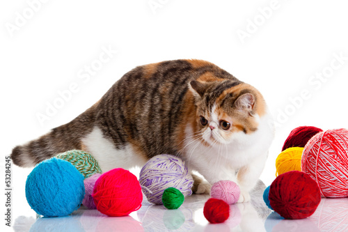 Printed kitchen splashbacks Cat persian exotic cat isolated with balls of different colours