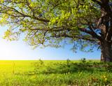 Fototapeta Landscape - Tree