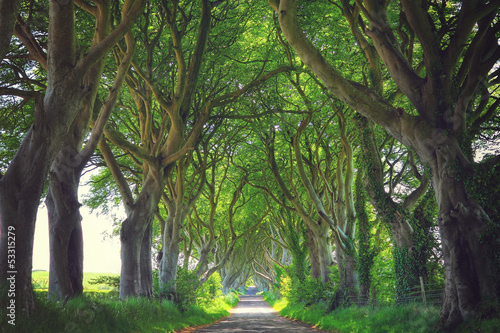 Tuinposter Weg in bos Dark Hedges trees