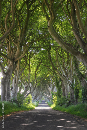 Magical woods of Dark Hedges #53315281