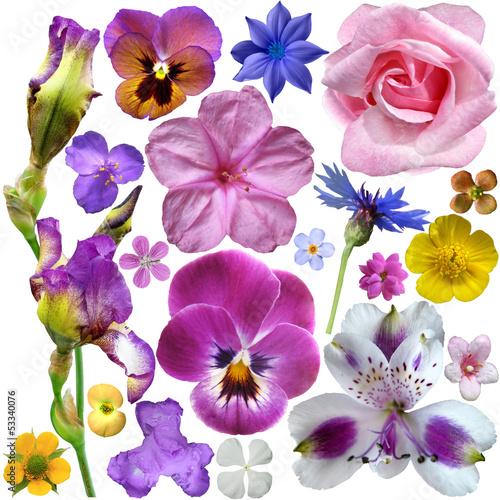 zestaw-botanicznych-wiosennych-kwiatow