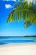 Ветки пальмы на фоне моря и неба