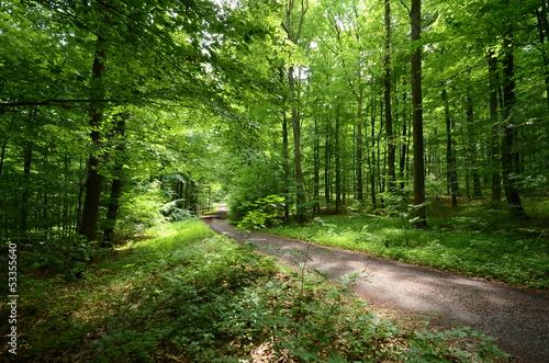Spoed Fotobehang Weg in bos Waldweg im Sommer