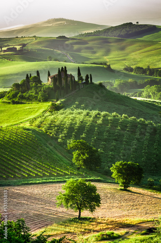 Foto op Plexiglas Toscane Farm of olive groves and vineyards