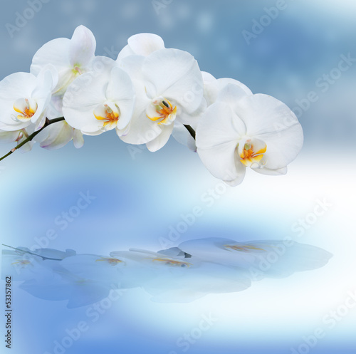 Close up of orchids with reflection.
