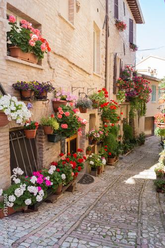 Fototapety, obrazy: Vicolo con vasi in fiore, Spello