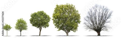 Fotografía  Différentes étapes de la vie d'un arbre sur fond blanc