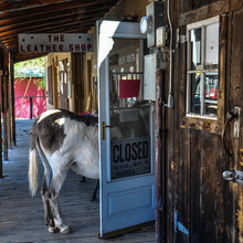 Stubborn Donkey In A Shop Door On Route 66