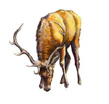 Jeleń Obraz Malowany