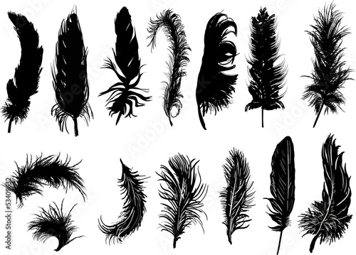 fourteen black feathers isolated on white