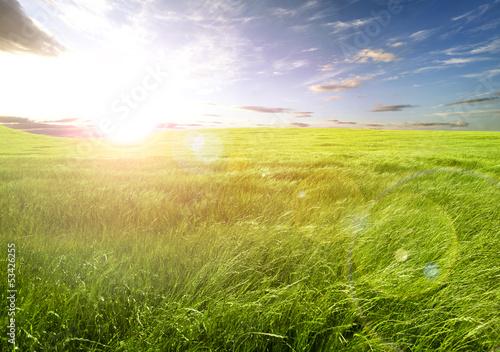 Puesta de sol y campos de hierba