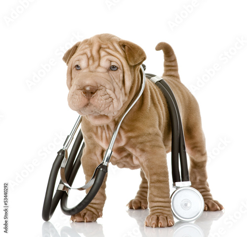 Fotografia sharpei puppy dog with a stethoscope on his neck. isolated