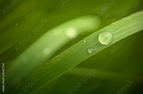 In einer grünen Nahaufnahme