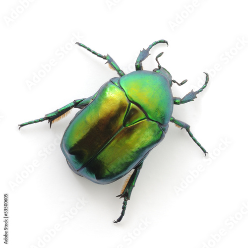 green beetle Wallpaper Mural