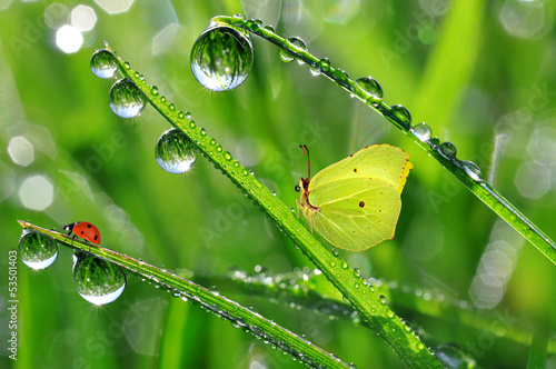 fresh morning dew with butterfly and ladybird