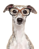 Dog in glasses on white background