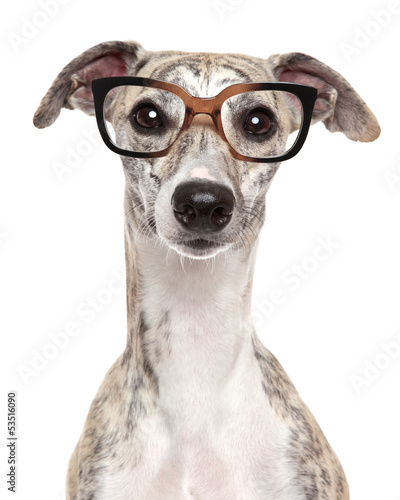 Dog in glasses on white background Canvas Print