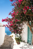 Fototapeta Do przedpokoju - Traditional greek alley on Sifnos island, Greece