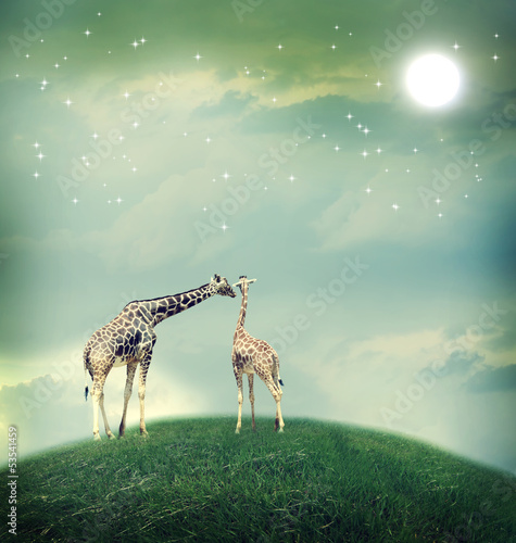 Photo  Giraffes in friendship or love concept image