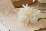 Manoscritto e peonia