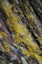 Rock Crevices With Lichen - Ba...