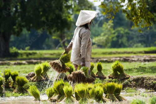 Photo Rice plantation in Laos