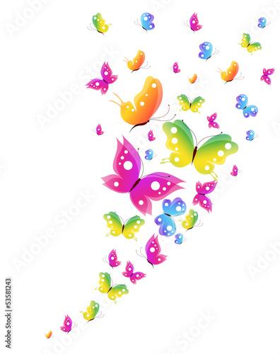 Poster Vogels, bijen butterfly,butterflies