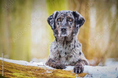 Hund liegt auf einem Baumstamm Fototapete