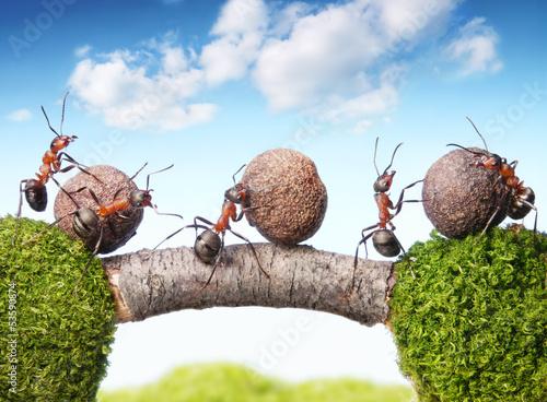Foto-Flächenvorhang ohne Schienensystem - team of ants rolling stones on bridge, teamwork (von Antrey)