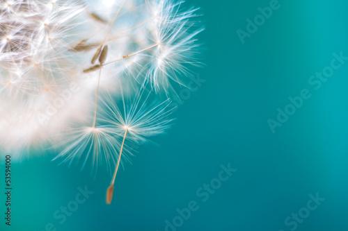 Fotobehang Paardebloem пушистый одуванчик