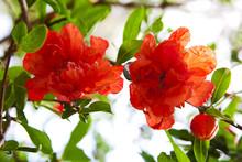 Beautiful Red Flowers Blooming...