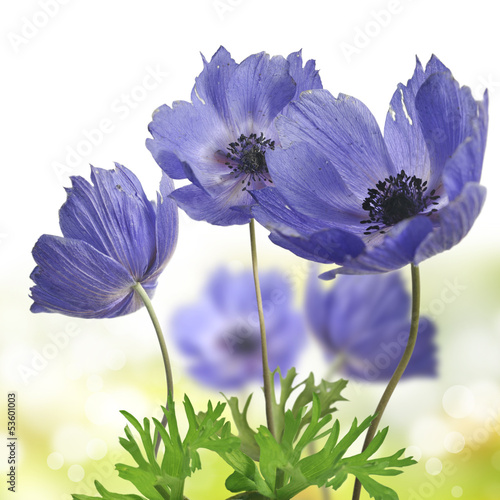 Fotografía kwiat