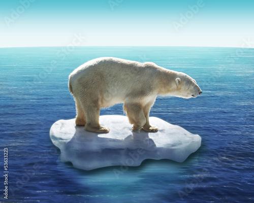 Deurstickers Ijsbeer Ours Polaire / Fonte des glaces