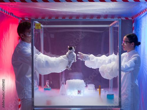 Fotografía  experiments with live animal in protection enclosure