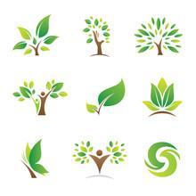 Tree Of Life Symbol And Icon