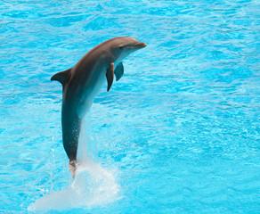 Fototapeta Dolphin