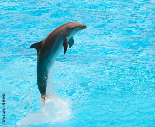 Staande foto Dolfijn Dolphin