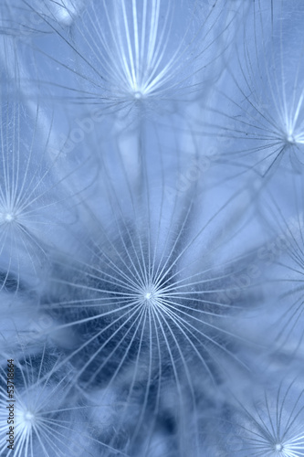 Keuken foto achterwand Paardebloemen en water Abstract colorful dandelion